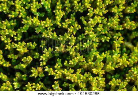 Macro photo of green plant. Natural background