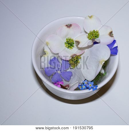 Dogwood Blossom Forget Me Nots Myrtil Floating On Water In A White Cup