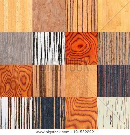 Collage Of Unusual Natural Wooden Texture, Tree Veneer Background