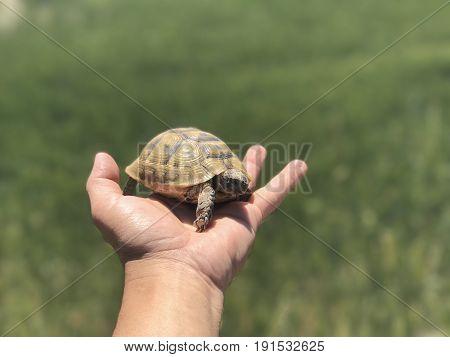 Australasian Mediterranean Tortoise & turtle cute lovely