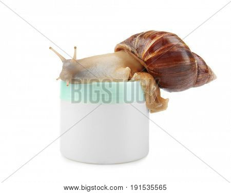 Giant Achatina snail and cosmetic product on white background