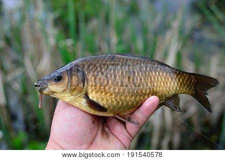 Summer fishing for carp on the lake