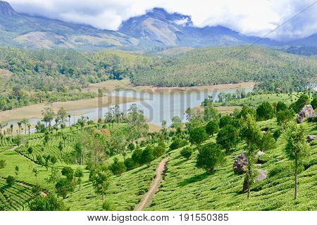 Images from the hills of Munnar, Kerala
