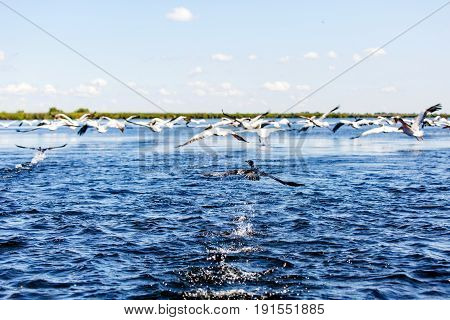 Landscape photo of flying water birds in Danube Delta