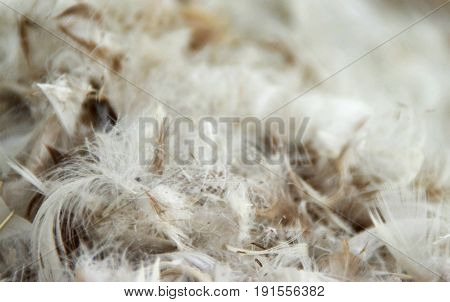 The pile of fluffy feathers. The plumage in close-up view.