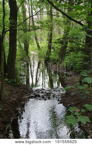 Calm stream in city park forest in Poznan