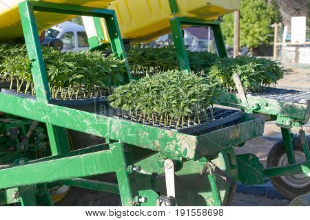 planter on a tractor with industrial hemp seedlings