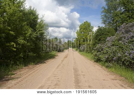 rural ground road with bushes of flowering lilac on the sidelines