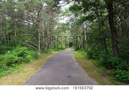 A waking path in the woods in Wisconsin