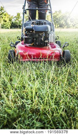 Lawn mower cutting green grass in backyard garden service.