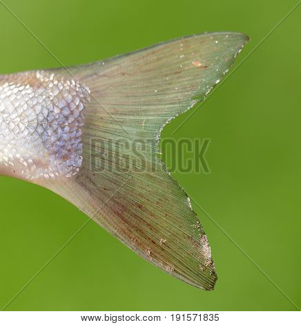The tail of a fish in the open air .