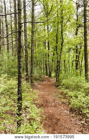 Path through Shoolman Preserve in Rochester Massachusetts