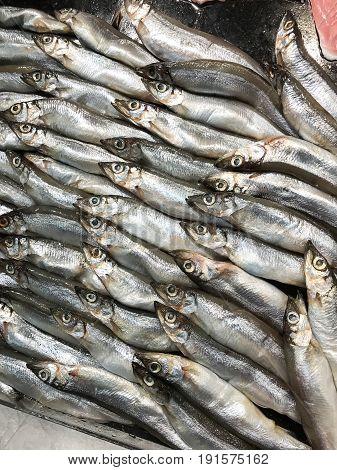 Closed up Shishamo fish smelt fish in the food shop