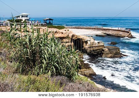 LA JOLLA, CALIFORNIA - JUNE 16, 2017:  Vegetation on a hillside overlooking the historic Children's Pool, built in 1931 as a place for visitor's to swim with protection from the ocean waves.