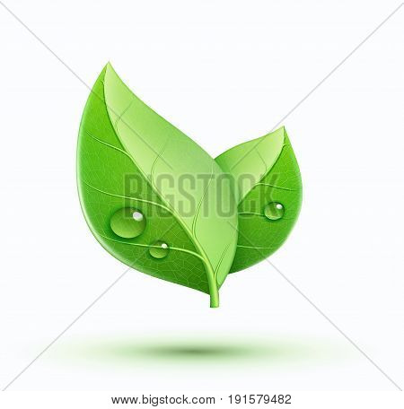 Vector illustration of eco concept icon with glossy green leaves. May be used in ecological medical chemical food and oil design.