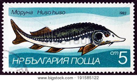 BULGARIA - CIRCA 1983: a stamp printed in Bulgaria shows Sturgeon Huso Huso Fresh-water Fish circa 1983