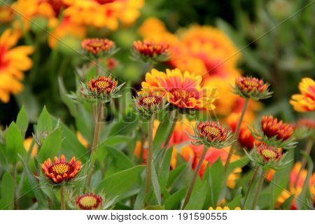 Beautiful image of wildflowers in open meadow, growing rampant under  Summer sun.