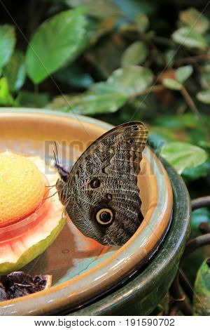 Large clay bowl with sweet nectar for the butterflies that want to land there.