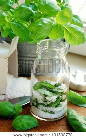 fresh basil leaves potted under coarse sea salt