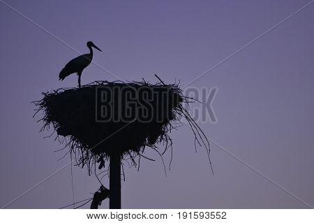 Stork nests and habitat & stork silhouette