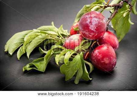 Juicy And Fleshy Plums On Branch On Dark Background Authentic Image With Real Leaves