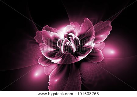 Abstract Exotic Flower With Textured Petals On Black Background. Fantasy Fractal Design In Pink Colo