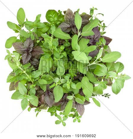 Fresh spices and herbs bouquet isolated on white background cutout. Sweet basil, red basil leaves, sage, marjoram and thyme bunch. Top view.