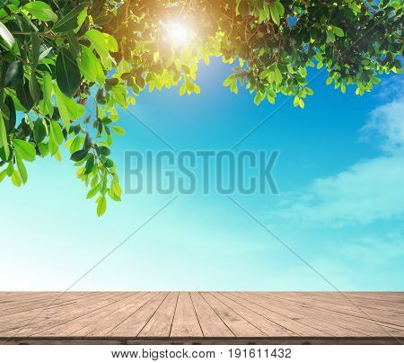 empty wood plank floor mock on the blule sky with green leaves and sun light for display or montage your work background