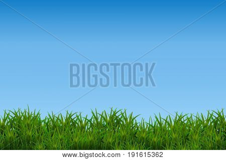 Green glossy grass isolated on blue sky background.