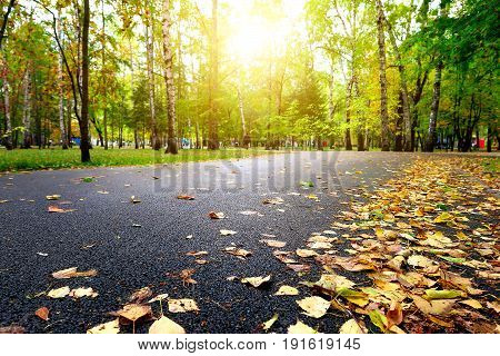 Road in the Autumn Park with Yellow Foliage in Foreground