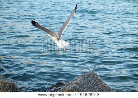 Beautiful landscape with a gull and waves