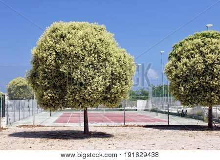 Beautiful trees against empty tennis court in country public park at summer sunny day