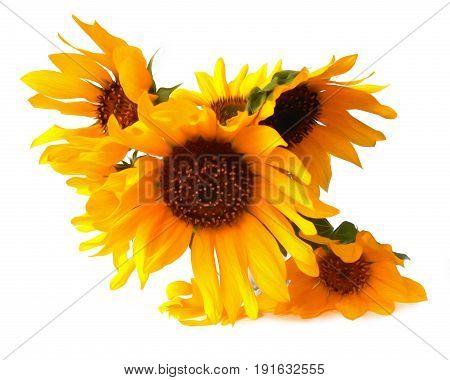 Light Tender Air Petals Flew Around The Yellow Sunflower Fresh In Ceramic Vase, Photo Manipulation