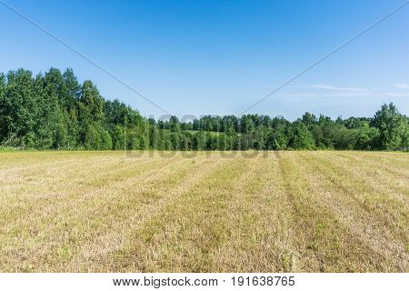 A field of mown grass against a blue sky and a forest in good weather