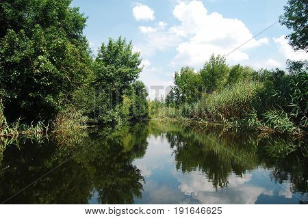 Summer Floodplain River With Jungles Of Reeds And Trees.
