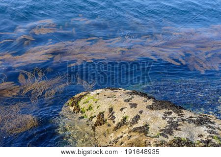 image of algae in clear water in the rocky shore