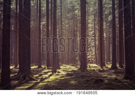 Magical morning sunlight in a deep forest in Baden-Württemberg Germany.