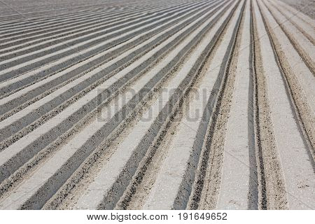 Dutch landscape with stripes of plowed field in early spring