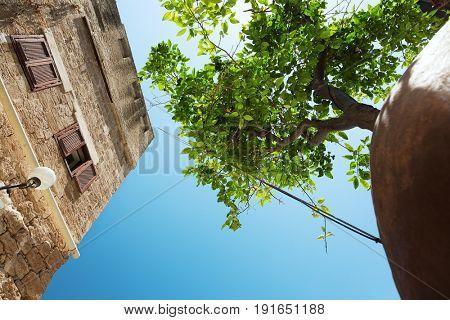 Suspended Orange Tree in Jaffa, Israel.