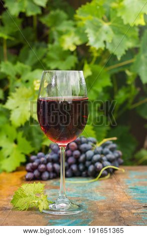 Wine Glass Wirh Red Wine, Outdoor Terrace, Wine Tasting In Sunny Day, Green Vineyard Garden Backgrou