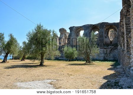 Trees In Front Of The Grotto Di Catullo Near Sirmione At Lake Garda