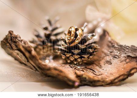 Wedding rings on the bark. Wedding idea. Closer to nature.