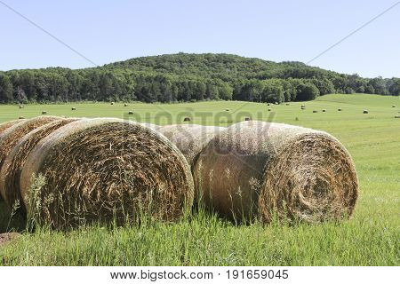 Several round bales of hay on a green field with a hill and trees in the background