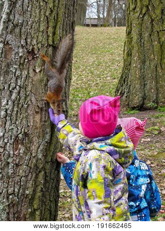 children fed peanuts little red-haired squirrel sitting on the tree