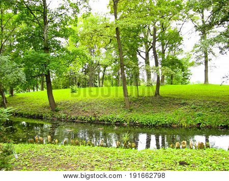 landscape stream in the green forest meanders among green trees