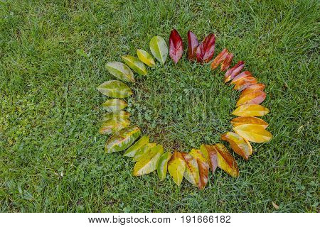 Gradient colored leafs arranged circle shape on grass
