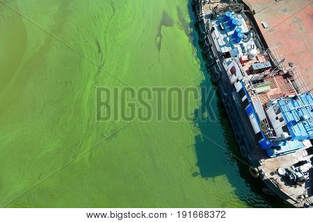 Tugboat In Water With Green Algae