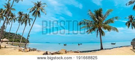 Paradise palm and tropical beach Phi phi island Thailand