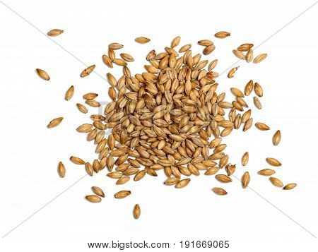 Malted Barley on a White Background, Grain