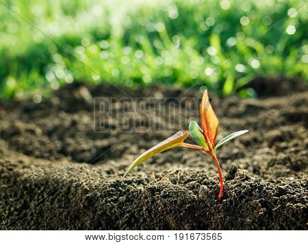 nature background with a green sapling growth